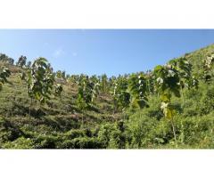 Plantaciones de teca