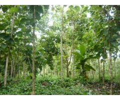 Servicios Forestales V&M