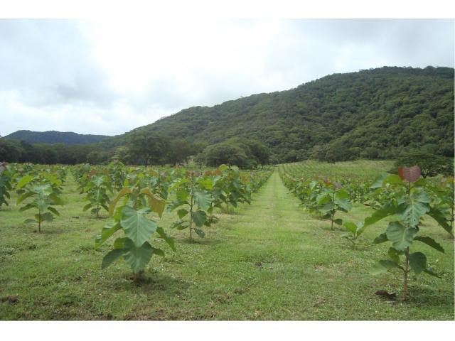 servicios y mantenimiento de plantaciones