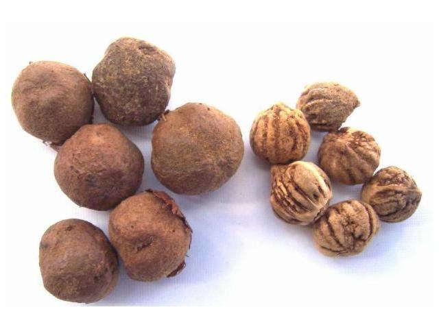 semillas forestales certificadas y de fuentes identificadas