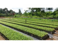 Arboles Forestales Plantas Ornamentales