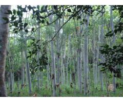 Servicios Forestales Gómez Solís