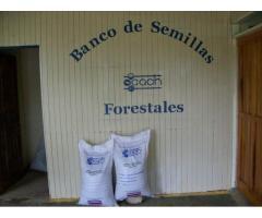 Semillas de Teca y Melina Certificada