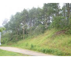 Montes Urales vende fincas, madera