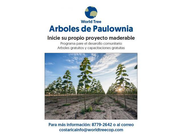 Plantaciones de Paulownia