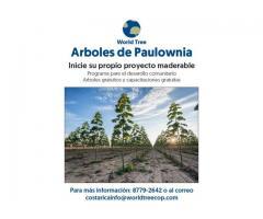 Arboles de Paulownia