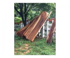 Se vende madera de Guanacaste, Cenízaro y Pochote (silvestre)