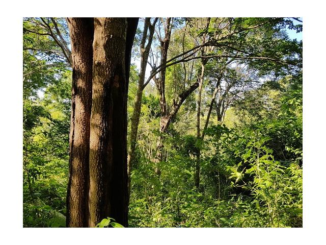 Se vende propiedad con bálsamo y árboles maderables en El Salvador.