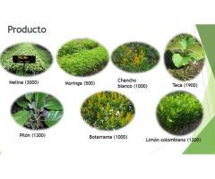 ventas plántulas forestales certificadas